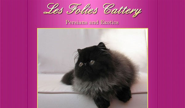 Les Folies Cattery
